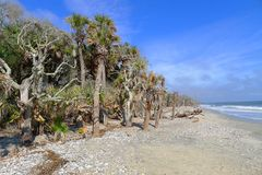 Залив ботаники Стоковое фото RF
