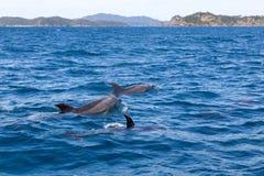 Залив дельфинов островов Стоковые Изображения RF