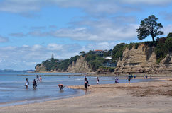 Залив Окленд Новая Зеландия коричневых цветов Стоковая Фотография