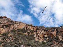 Залив утеса Morro Стоковые Фотографии RF