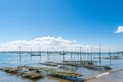 Залив Arcachon, Франция, кровать устрицы около фретки крышки Стоковые Фото