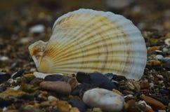 Залив Romanovka Primorsky Krai, утесы поднятые морем, летом на горячий день, текстура естественного камня очень красив Стоковая Фотография RF