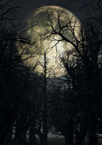 Залитое лунным светом небо с пугающими деревьями Стоковая Фотография RF