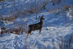 за иллюстрацией новым s дома вечера оленей малый год зимы валов Стоковое Фото