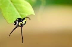 за листьями гусеницы стоковое изображение