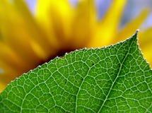 за листьями стоковые фотографии rf