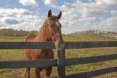 за небом лошади загородки вниз Стоковое Фото