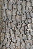 Заднее textura дерева Стоковые Фотографии RF