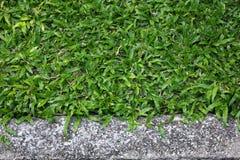 Задние земные трава и камень Стоковое Изображение RF