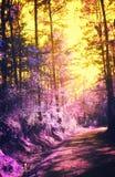 Задние дороги в цвете Стоковое Изображение RF
