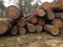 Задние древесины стоковая фотография