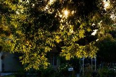 Задние светлые листья дерева в районе Стоковая Фотография RF