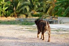 Задний взгляд прогулки бездомной собаки в внешней предпосылке природы Стоковые Изображения RF