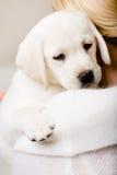 Задний взгляд щенка обнимать женщины Стоковая Фотография