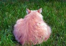 Задний кот Стоковая Фотография