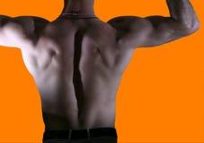 задний мужчина тела Стоковая Фотография RF