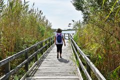 Задний backpacker охраняемой природной территории залива на положении США Вирджинии следа стоковые изображения