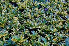 Задняя земля с листьями Стоковые Изображения RF