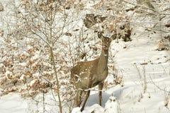 задняя зима Стоковые Фото