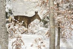 задняя зима Стоковые Изображения RF