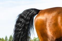 Задняя сторона кабеля ноги лошади Стоковые Фотографии RF