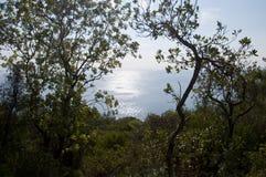 Задняя часть взгляда острова принца (Ada Buyuk) моря Стамбула Стоковые Фотографии RF