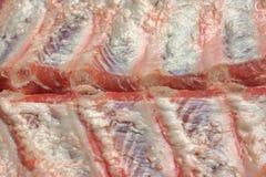 Задняя часть младенца свинины шутит над предпосылкой конца-Вверх Стоковое фото RF