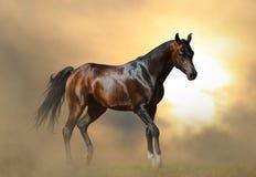Задняя часть лошади с сдерживает экипажа Стоковые Фото