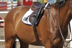 задняя часть лошади Стоковые Изображения
