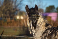 задняя часть лошади Стоковая Фотография RF