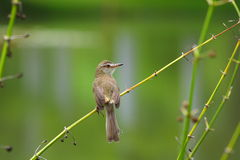 Задняя часть птицы на ветви Стоковые Фото