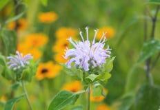 Задняя часть странного фиолетового цветка горизонтальная внутри Стоковое Фото