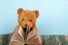 задняя школа к связанное одеяло Плюшевый медвежонок читая открытую книгу hardback Скопируйте космос для текста Стоковые Изображения
