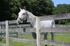 за лошадью загородки Стоковое фото RF