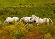 за солнцем 3 лошадей облаков накаляя гремя Стоковые Изображения