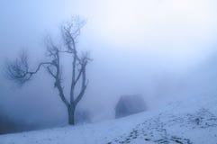 за туманом Стоковые Изображения