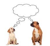 2 задумчивых собаки Стоковые Изображения RF