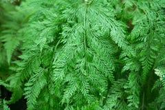 Задыхает лист дерева Стоковая Фотография