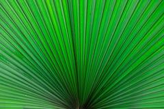 Задыхает лист дерева Стоковое фото RF