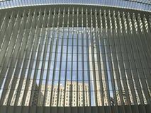 За oculus Стоковое Изображение RF