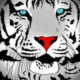 звеец белизны тигра портрета novosibirsk иллюстрация штока