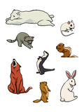 звеец млекопитающих собрания Стоковые Фотографии RF