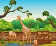 звеец США giraffes 2 atlanta Georgia иллюстрация вектора