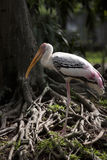 звеец фламингоа dusit Стоковое фото RF