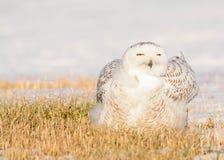 звеец prague сыча снежный Стоковое Фото