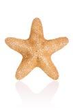 звезда джунглей Стоковые Изображения RF