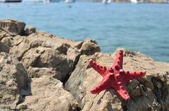 Звезда Красного Моря и голубое море Стоковое Фото