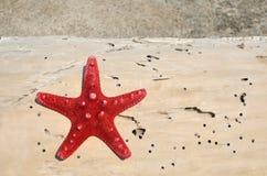 Звезда Красного Моря на журнале Стоковые Фотографии RF