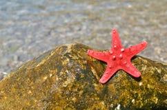 Звезда Красного Моря на утесе Стоковые Изображения RF
