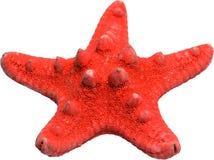 звезда красного цвета рыб Стоковые Изображения RF